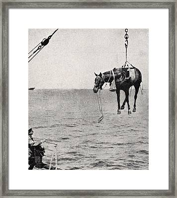 Transferring Horsel From Ship To Land Framed Print