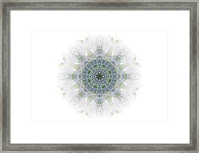Transformation And Growth - The Medicine Of The Birch  Framed Print