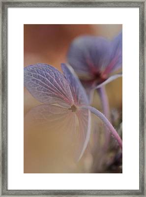 Threshold Framed Print by Connie Handscomb