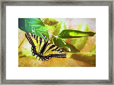 Framed Print featuring the photograph Transformation  by Diane Schuster