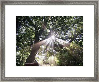 Transformed Framed Print by David and Lynn Keller
