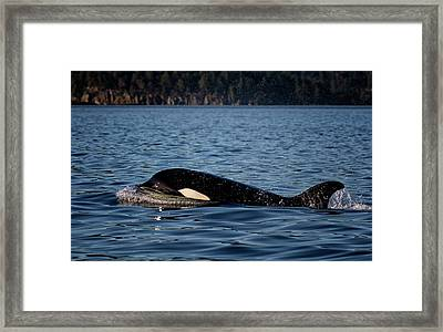 Transient Framed Print by Randy Hall