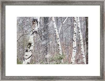 Transition, Spring Squall 3 - Framed Print