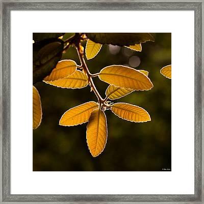 Translucent Leaves Framed Print