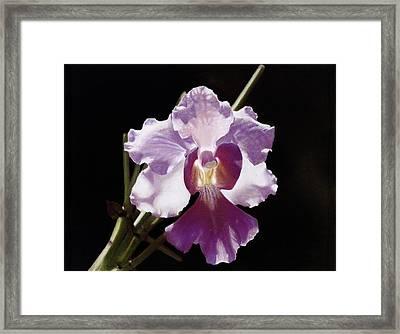 Translucent Orchid Framed Print by Nanybel Salazar