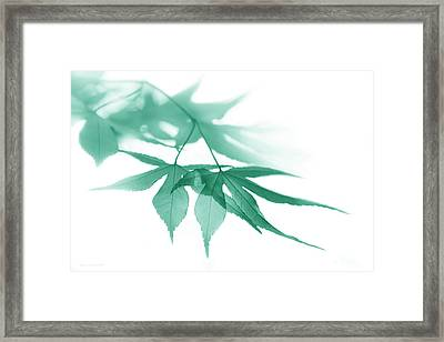 Framed Print featuring the photograph Translucent Teal Leaves by Jennie Marie Schell