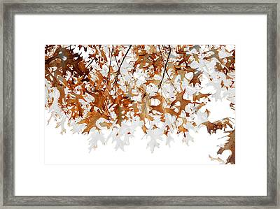 Translucent Framed Print by The Forests Edge Photography - Diane Sandoval