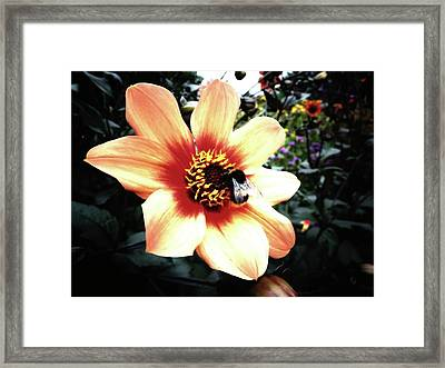 Translucent Wings Framed Print