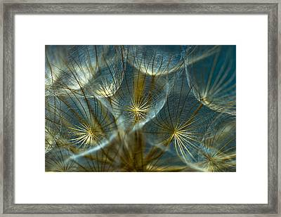 Translucid Dandelions Framed Print by Iris Greenwell