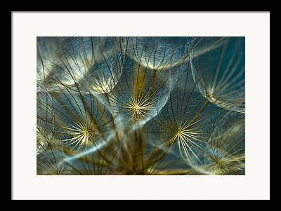Wildflower Framed Prints