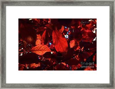 Transparence 12 Framed Print by Jean Bernard Roussilhe