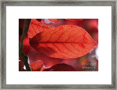 Transparence 23 Framed Print by Jean Bernard Roussilhe
