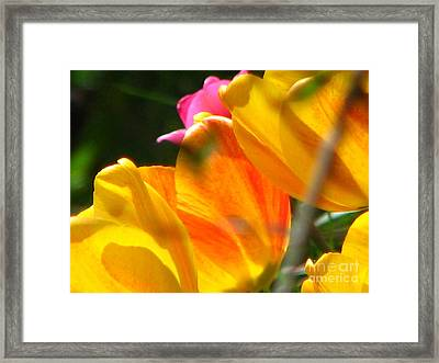 Transparency Framed Print by Roxy Riou
