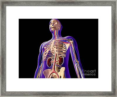 Transparent View Of Human Body Showing Framed Print