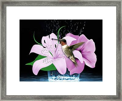Transport Hummingbird Framed Print