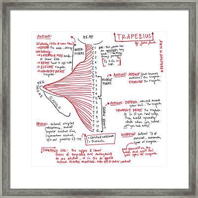 Trapezius Framed Print