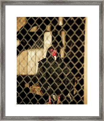 Trapped Framed Print by Christopher Wood