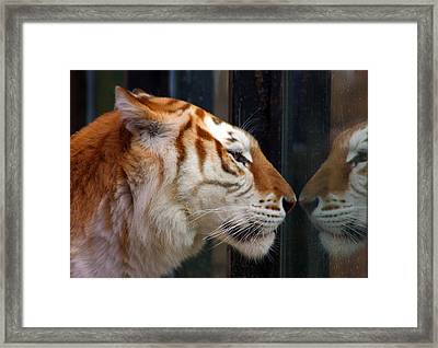 Trapped Framed Print by Jason Hochman