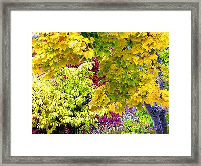 Trappings Of Autumn Framed Print by Will Borden