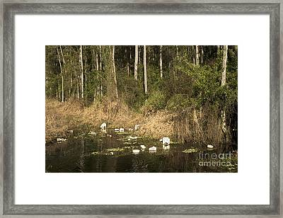 Trash Floats In The Water Framed Print by Inga Spence