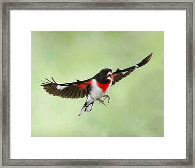 Framed Print featuring the photograph Trash Talking Rosie by Gerry Sibell