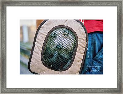 Framed Print featuring the photograph Travel Dog by Dean Harte