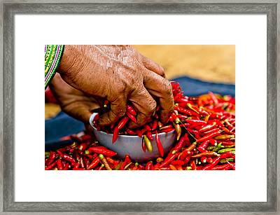 Woman Holding Red Chillies, Can Cau Market, Sapa,vietnam Framed Print