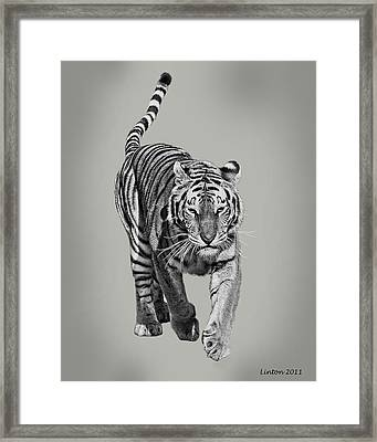 Traveling Tiger Framed Print by Larry Linton
