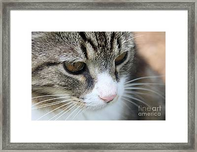 Traveller Framed Print by Wendy Coulson
