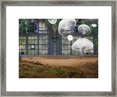 Travels With Jellyfish Framed Print