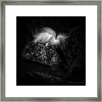 Tread Lightly Framed Print by Marvin Spates