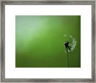 Tread Softly Framed Print by Rebecca Sherman