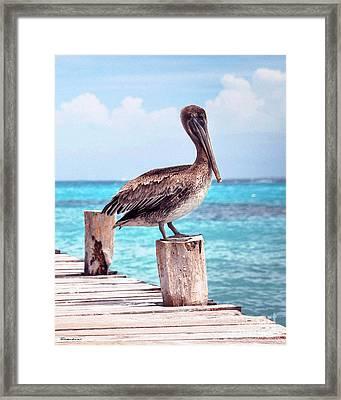 Treasure Coast Pelican Pier Seascape C1 Framed Print by Ricardos Creations