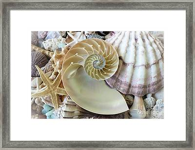 Treasures From The Sea Framed Print by Colleen Kammerer
