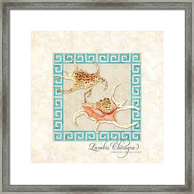 Treasures From The Sea - Spider Conch Framed Print by Audrey Jeanne Roberts
