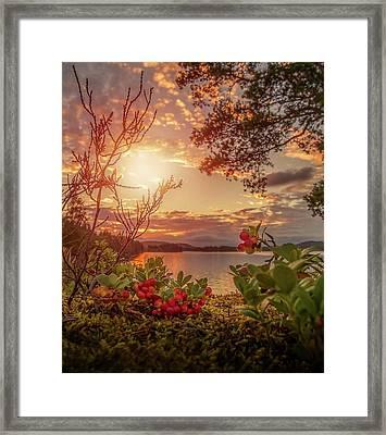 Treasures In Nature Framed Print