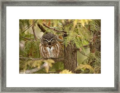 Treasures Of The Forest Framed Print