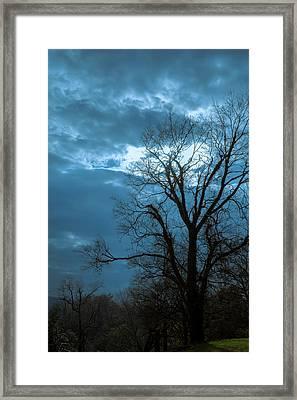 Tree # 23 Framed Print