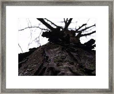 Tree 004 Framed Print by Ryan Vaal