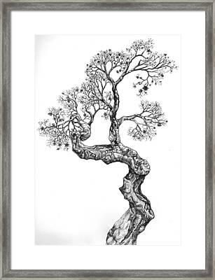 Tree 14 Framed Print
