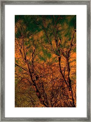 Tree Abstract Framed Print by Linda Sannuti