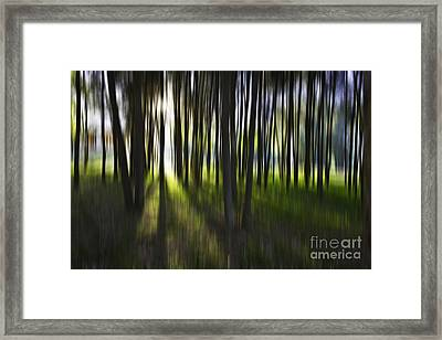 Tree Abstract Framed Print