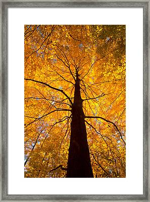 Tree Aflame Framed Print by Linda Unger