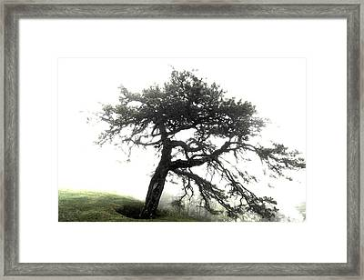 Framed Print featuring the photograph Tree by Alex Grichenko