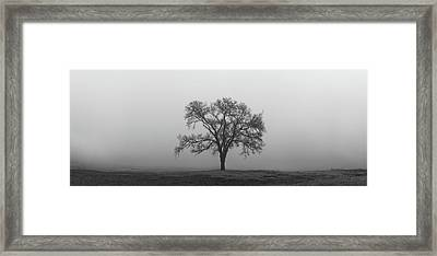 Framed Print featuring the photograph Tree Alone In The Fog by Todd Aaron
