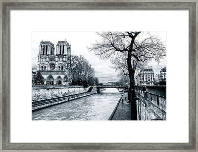 Tree Along The Seine Framed Print