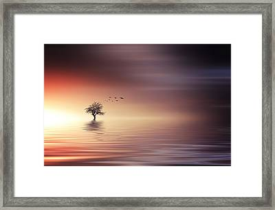 Tree And Birds On Lake Sunset Framed Print