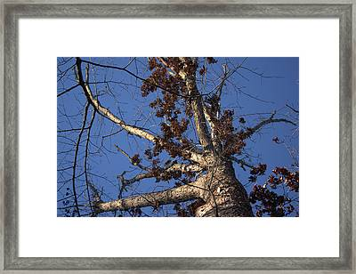 Tree And Branch Framed Print