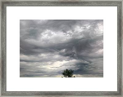 Tree And Cloud Framed Print by Stephen Doughten