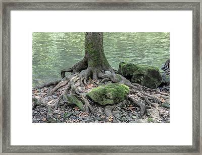Tree And Moss. Framed Print by William Morris